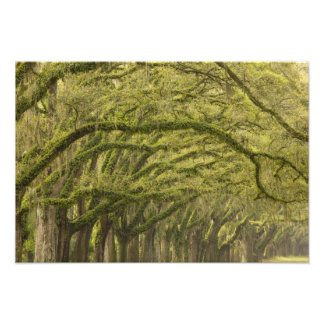 USA; Georgia; Savannah. Oak trees with Photo Art