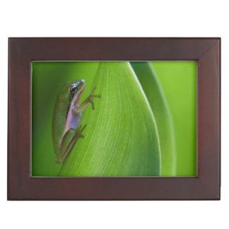 USA, Georgia, Savannah, Tiny Frog On A Leaf Memory Boxes