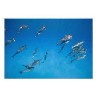 USA, Hawaii, Big Island, Underwater view of 2 Photographic Print