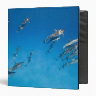 USA, Hawaii, Big Island, Underwater view of 2 Vinyl Binder