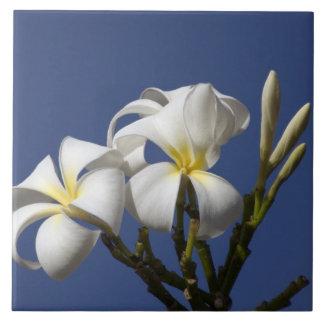 USA, Hawaii, Kauai, white plumeria. Tiles