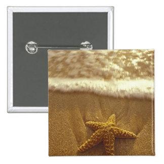 USA, Hawaii, Maui, Maui, Kihei, Starfish and 2 Inch Square Button
