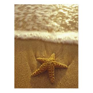 USA Hawaii Maui Maui Kihei Starfish and Postcards