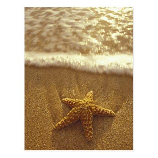 USA, Hawaii, Maui, Maui, Kihei, Starfish and Postcards