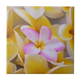 USA, Hawaii, Oahu, Plumeria flowers in bloom 1 Tile