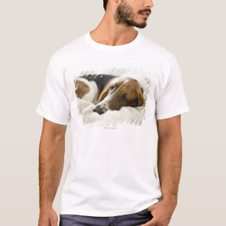 USA, Illinois, Washington, Portrait of Bassett T-Shirt