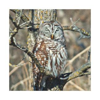 USA, Kansas. Barred Owl (Strix Varia) Canvas Print