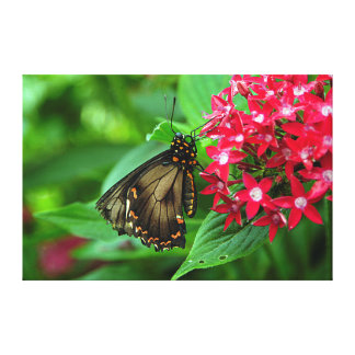 USA, Kansas, Butterfly On Red Flowers Canvas Prints