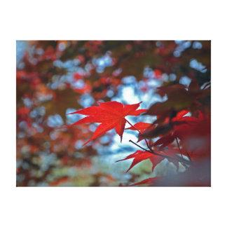 USA, Kansas. Fall Colors Gallery Wrap Canvas