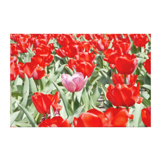 USA, Kansas. Field Of Tulips Gallery Wrapped Canvas