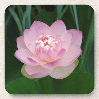 USA, Kansas, Pink Water Lilly Drink Coaster