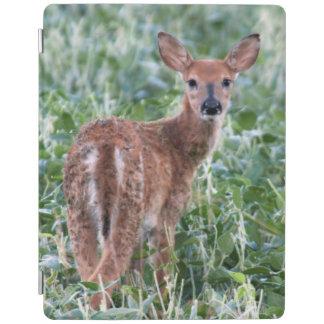 USA, Kansas, Small Whitetail Deer iPad Cover