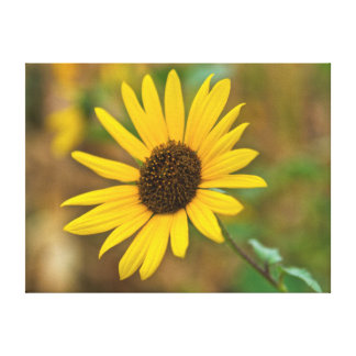 USA, Kansas, Sunflower Close-Up Stretched Canvas Prints