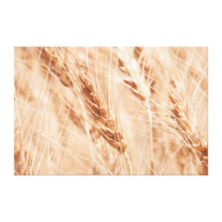 USA, Kansas, Wheat At Harvest Time Gallery Wrapped Canvas