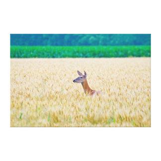 USA, Kansas, White Tail Doe Crossing Wheat Gallery Wrap Canvas