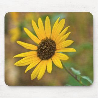 USA, Kansas. Wild Sunflower Mouse Pad