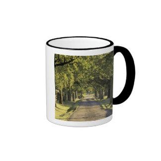 USA, Kentucky, Lexington. Tree-lined driveway, Coffee Mug