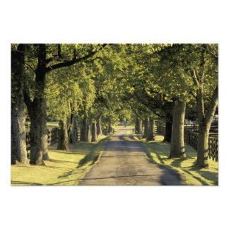 USA, Kentucky, Lexington. Tree-lined driveway, Photographic Print