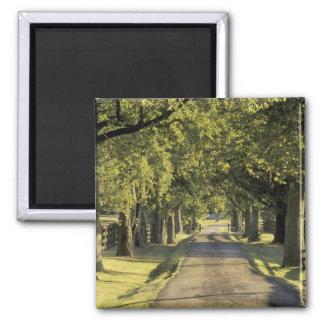 USA, Kentucky, Lexington. Tree-lined driveway, Square Magnet