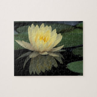 USA, Kentucky, Louisville Domestic water lily, Jigsaw Puzzle