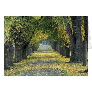USA, Kentucky, Louisville. Tree-lined road in Card
