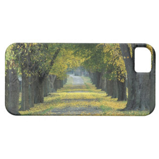 USA, Kentucky, Louisville. Tree-lined road in iPhone 5 Cases