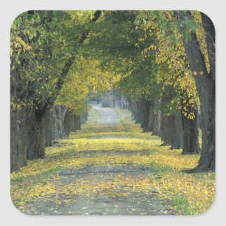 USA, Kentucky, Louisville. Tree-lined road in Square Sticker