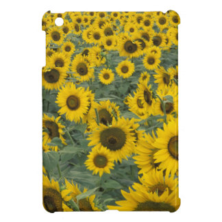 USA, Kentucky Pattern in field of cultivated Cover For The iPad Mini