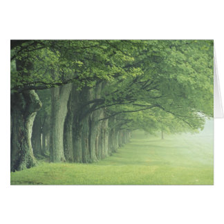 USA, Kentucky. Row of trees in spring Greeting Card