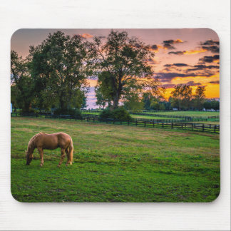 USA, Lexington, Kentucky. Lone horse at sunset 2 Mouse Pad