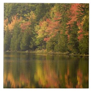 USA; Maine; Acadia NP. Fall reflections at Ceramic Tile