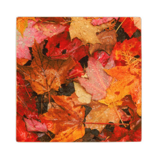 USA, Maine. Autumn maple leaves Maple Wood Coaster