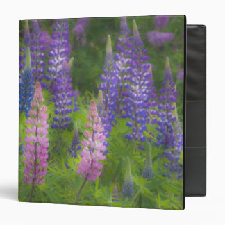 USA, Maine, Southwest Harbor. Blooming lupine Vinyl Binder