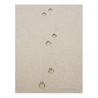 USA, Massachusetts, dog's track on sand Postcard