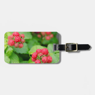 USA, Massachusetts, Nantucket. Ripe Raspberries Luggage Tag
