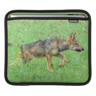 USA, Minnesota, Sandstone, Minnesota Wildlife 10 iPad Sleeves