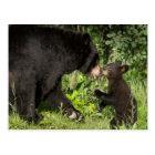 USA, Minnesota, Sandstone, Minnesota Wildlife 13 Postcard