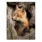 USA, Minnesota, Sandstone, Minnesota Wildlife 14 Postcard