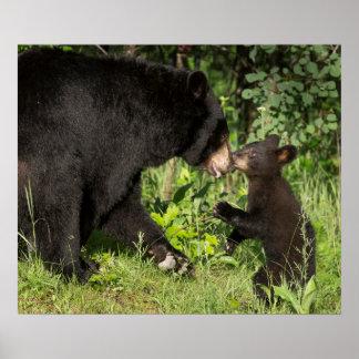 USA, Minnesota, Sandstone, Minnesota Wildlife 14 Poster