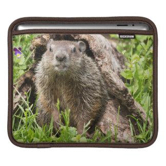 USA, Minnesota, Sandstone, Minnesota Wildlife 15 Sleeve For iPads