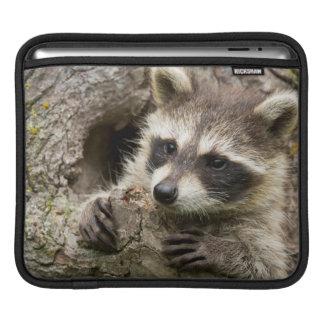 USA, Minnesota, Sandstone, Minnesota Wildlife 16 Sleeves For iPads