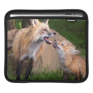 USA, Minnesota, Sandstone, Minnesota Wildlife 17 iPad Sleeves
