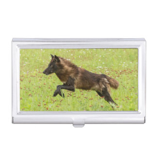 USA, Minnesota, Sandstone, Minnesota Wildlife 24 Case For Business Cards