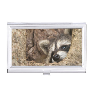 USA, Minnesota, Sandstone, Minnesota Wildlife 3 Business Card Holder