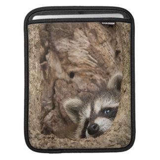 USA, Minnesota, Sandstone, Minnesota Wildlife 3 Sleeve For iPads