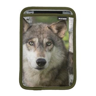 USA, Minnesota, Sandstone, Minnesota Wildlife 5 iPad Mini Sleeve