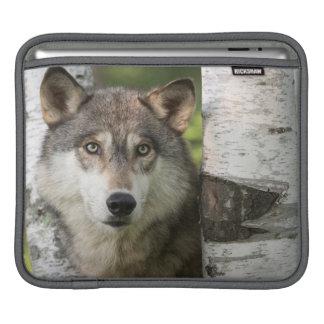 USA, Minnesota, Sandstone, Minnesota Wildlife 5 iPad Sleeves
