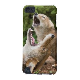USA, Minnesota, Sandstone, Minnesota Wildlife 6 iPod Touch (5th Generation) Cases