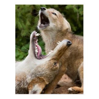USA, Minnesota, Sandstone, Minnesota Wildlife 6 Postcard