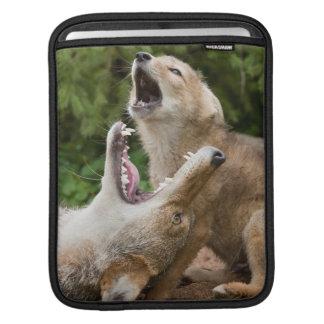 USA, Minnesota, Sandstone, Minnesota Wildlife 6 Sleeve For iPads